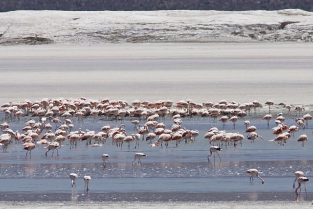 Salar-de-Atacama-Flamecos_816x544